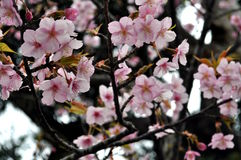 Fleurs gaies Image stock