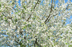 Fleurs gaies de fleur la journée de printemps Photos libres de droits