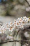 Fleurs gaies de fleur la journée de printemps Image stock