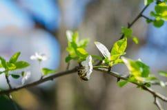 Fleurs gaies de fleur la journée de printemps Photo stock