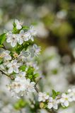Fleurs gaies de fleur la journée de printemps Photos stock