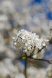 Fleurs gaies de fleur la journée de printemps Photographie stock libre de droits
