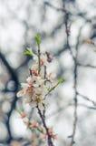 Fleurs gaies de fleur la journée de printemps Fleurs de beauté Photo stock
