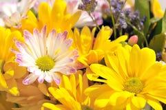 Fleurs gaies lumineuses de source Photo libre de droits