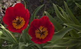 Fleurs gentilles Photo libre de droits