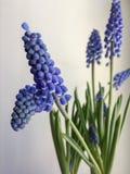 Fleurs gentilles Image libre de droits