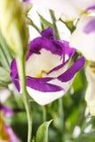 Fleurs gentilles Photographie stock libre de droits
