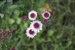 Fleurs gentilles Photos libres de droits