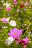 Fleurs gentilles dans le pré Image libre de droits