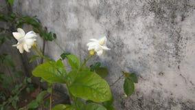 Fleurs gentilles de jardin Photographie stock libre de droits