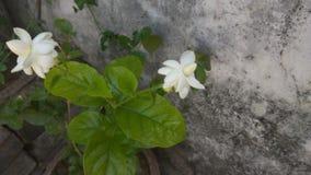 Fleurs gentilles de jardin Photographie stock