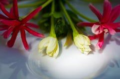Fleurs gentilles sur le plat en céramique Photographie stock libre de droits