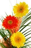 Fleurs - gerbera Photographie stock libre de droits