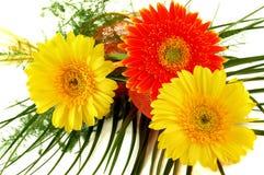 Fleurs - gerbera Photos libres de droits