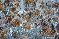 Fleurs givrées Photo libre de droits