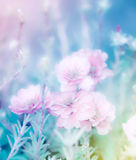 Fleurs grandiflora de Portulaca Image libre de droits