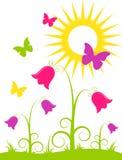 Fleurs, guindineaux et soleil Photographie stock