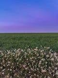 Fleurs, herbe, ciel le meilleur de la nature Image libre de droits