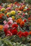 Fleurs - horizontal Photo libre de droits