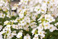 Fleurs idylliques d'été Images libres de droits