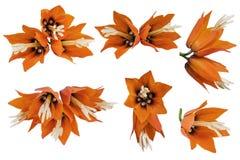 Fleurs impériales réglées Photographie stock