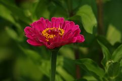 Fleurs impressionnantes Images libres de droits