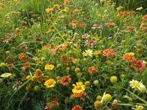 Fleurs impressionnantes photographie stock libre de droits