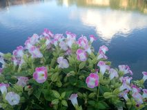 Fleurs inconnues Photo libre de droits