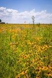 Fleurs indigènes de prairie Photos stock
