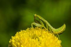 Fleurs, insectes Images libres de droits