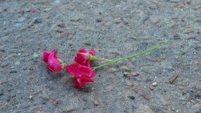 Fleurs isolées sur le bitume fluidifié Photo libre de droits