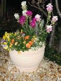 Fleurs japonaises photos libres de droits