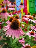Fleurs - jardin magique de Coneflower d'arc-en-ciel d'imagination Images stock