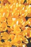 fleurs, jaune Images stock