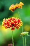 fleurs Jaune-inclinées Photographie stock
