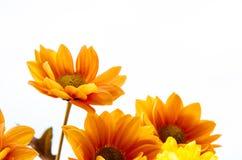 Fleurs jaune-orange Photo libre de droits