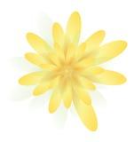 Fleurs jaune pâle Photo libre de droits