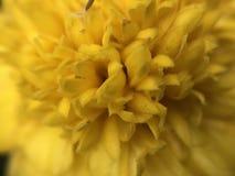 Fleurs jaunes étroites photographie stock libre de droits