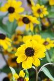 Fleurs jaunes, Image libre de droits