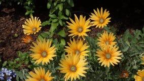 Fleurs jaunes clips vidéos