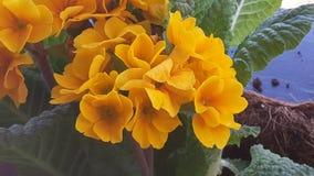 Fleurs jaunes photo libre de droits