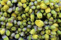 Fleurs jaunes Photographie stock libre de droits