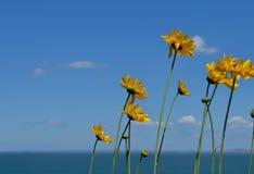 Fleurs jaunes image stock