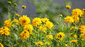 Fleurs jaunes banque de vidéos