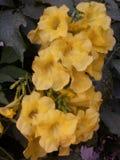 Fleurs jaunes Photos libres de droits