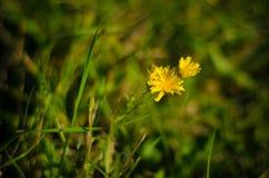 Fleurs jaunes images stock
