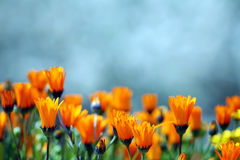 Fleurs jaunes. photos stock