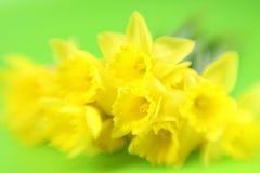 Fleurs jaunes abstraites Photos stock