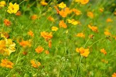 Fleurs jaunes abstraites brouillées dedans dehors Image libre de droits