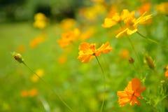 Fleurs jaunes abstraites brouillées dedans dehors Photos stock